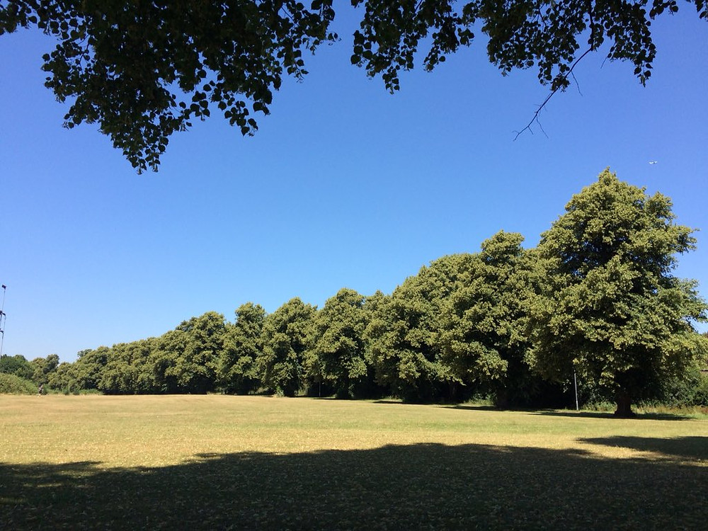 Picture of a sunny park in Reading