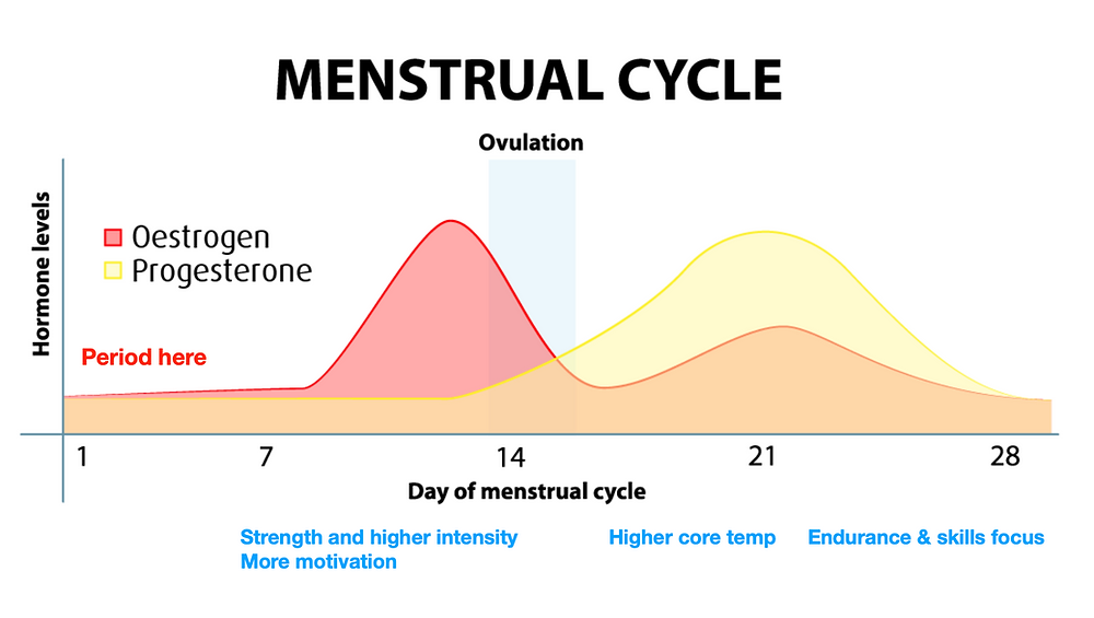 Graph of hormone levels and phases of monthly cycle as described in the text