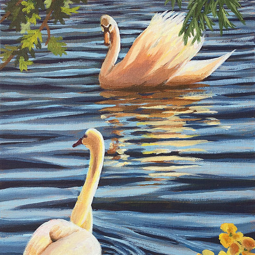 """""""A Pair of Swans"""""""