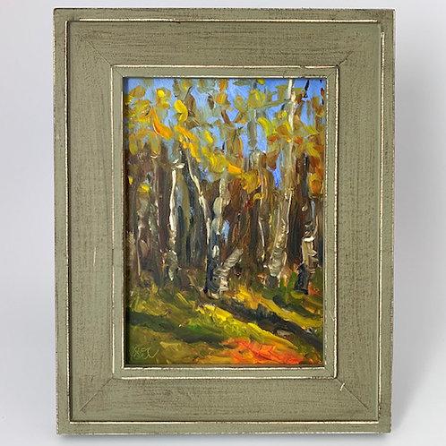 """Fall Birches"""