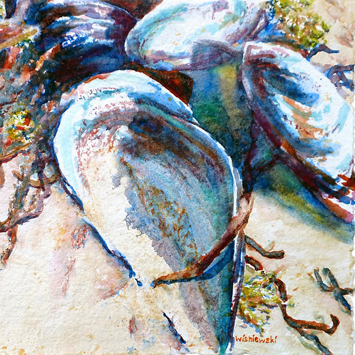 """Mussels on the Beach"""