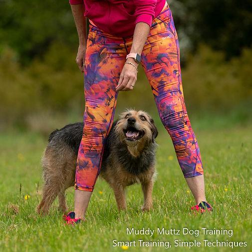 Jessie, Crossbreed, Dog Training, Trick