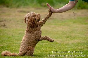 Cadi, Muddy Muttz Dog Training, Dog Trai