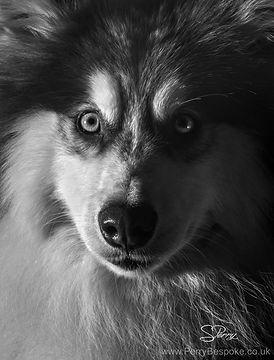 Growly Dog Class, Dog Reactivity, Dog Training, Dog Behaviour