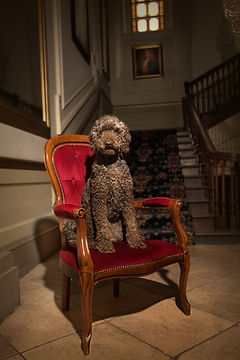House and Pet Sitting Carmarthenshire, Muddy Muttz Dog Training, Pet Sitting Ceredigion, Perry Bespo