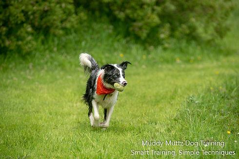Luna, Border Collie, Water, Fun, Dogs an