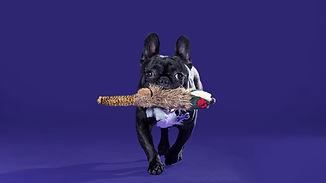 Doggie Workshops, Dog Workshops, Recall Training, Lead Training, Walking Nicely, Chase Recall, Dog G