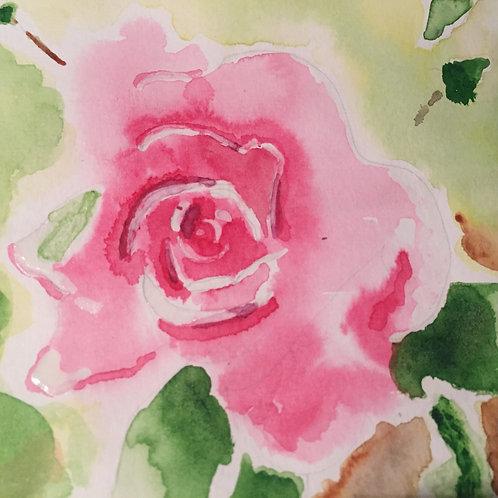 Rose fraîche