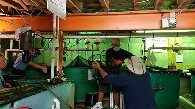 Netting fish in hatchery basement.jpg