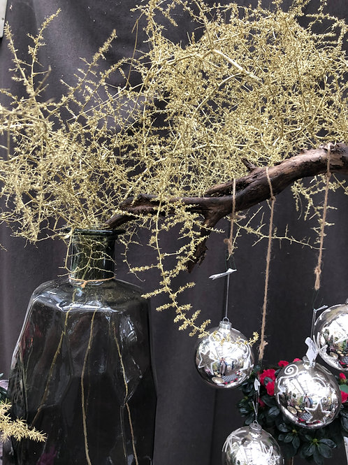 Asparagus gold, per Zweig