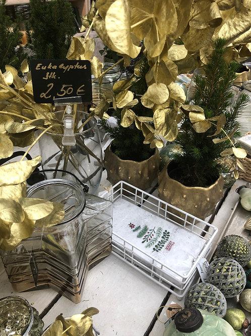 Eucalyptus gold, per Zweig