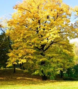 秋のスペシャルヨガレッスン