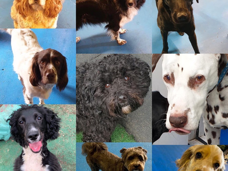 Favourite Photos of the Day from Doggy Day Care - Friday 5th March 2021
