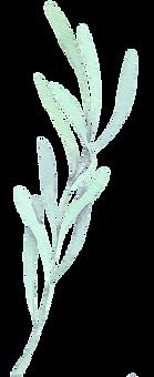 leaf 2.png