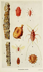 02-Indian-Insect-Life_-_Harold_Maxwell-L