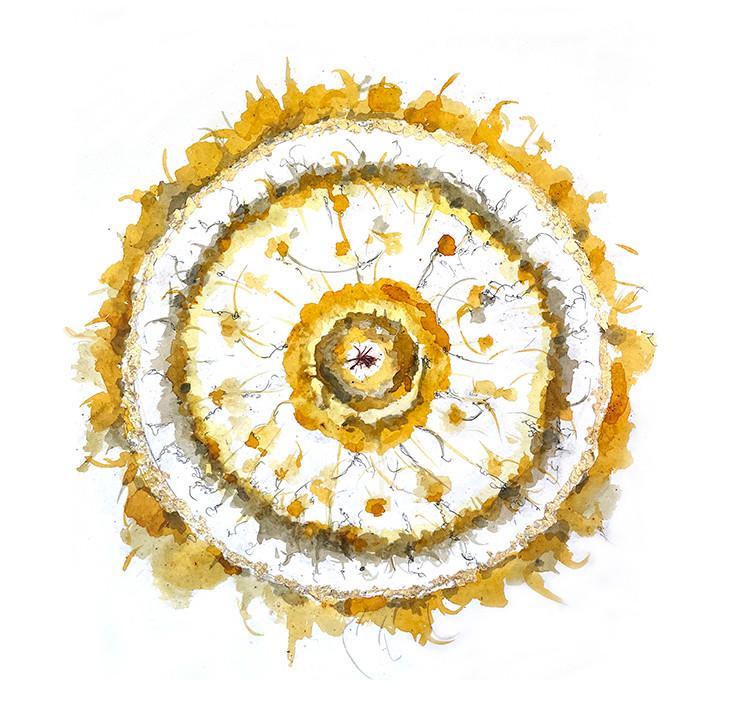 Saffron-flower.jpg