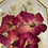 Thumbnail: Red Roses and Baby Breath
