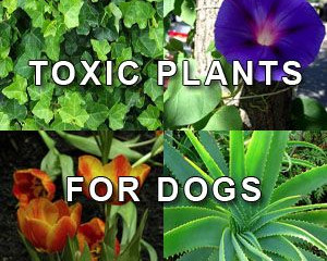 Toxic Plants for Your Pet