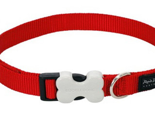Dangers of Dog Collars