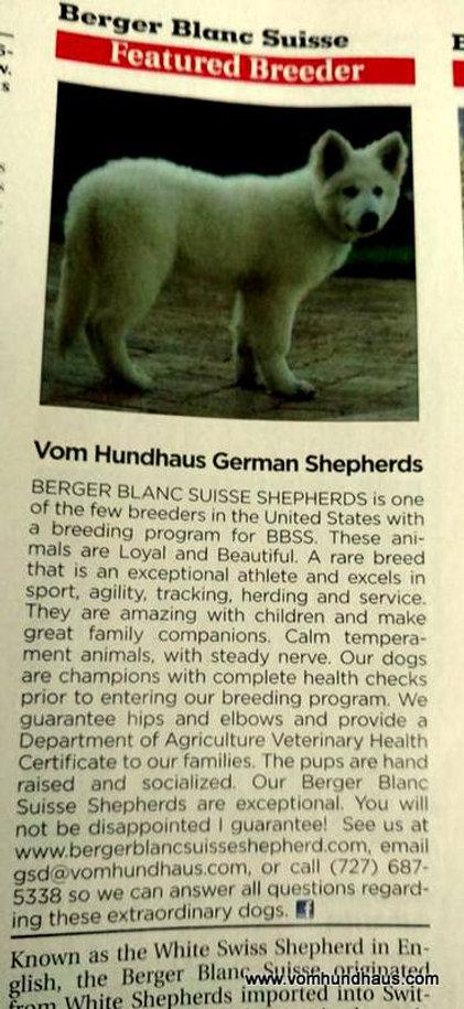 Berger Blanc Suisse Puppies 101
