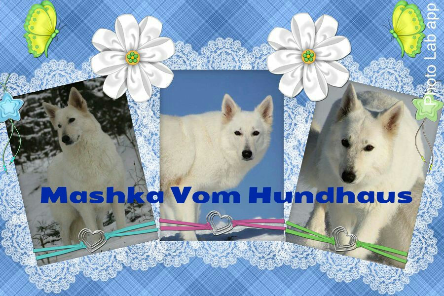 Beautiful Mashka. Reserve your Puppy today!