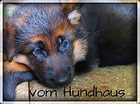 vom hundhaus german shepherd puppy