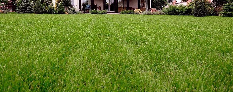 Home Ian S 4 Season Lawn Care