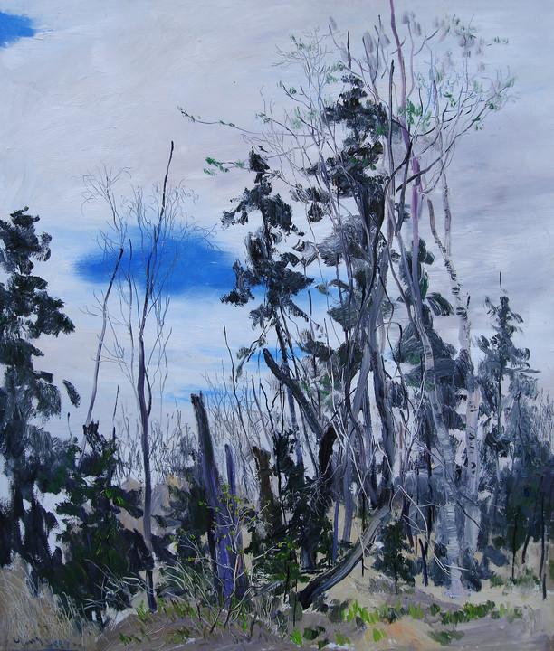 Pine & Birch Trees
