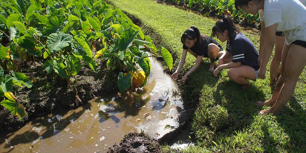 Kuleana Sustainable Hawaii Education Program: 3/8 ~ 3/13/20