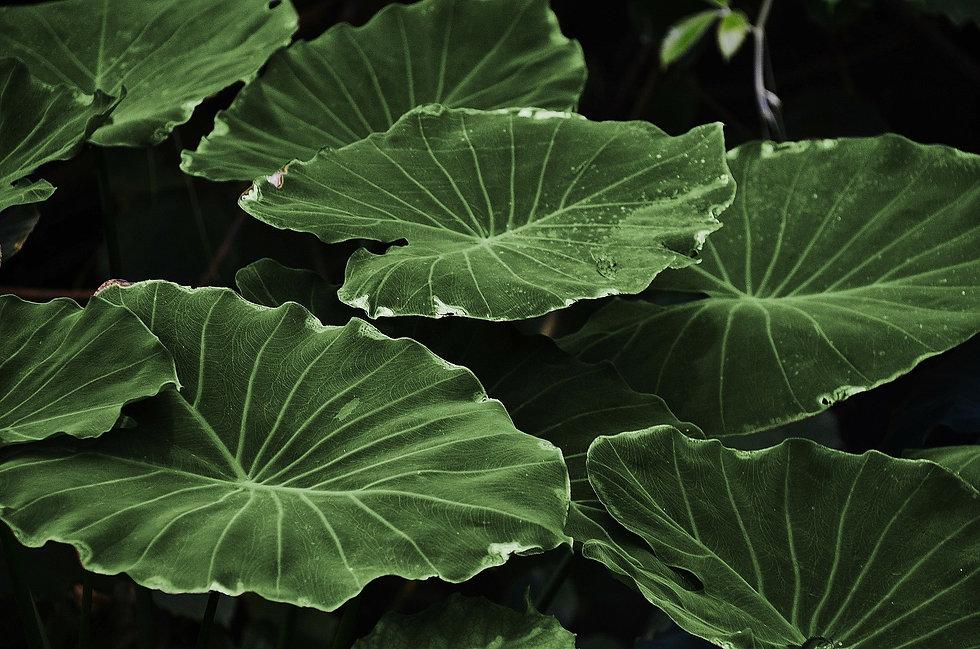 leaves-318743_1920.jpg