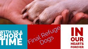 Final Refuge Dogs