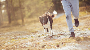 September is Responsible Pet Ownership Month