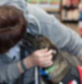 Volunteer getting dog kisses