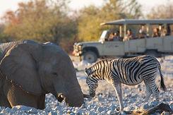 002-Etosha-Wildlife-1024x683.jpg
