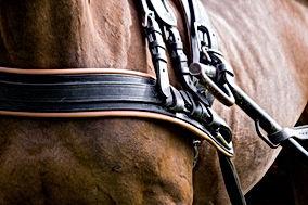 Horse_harness.jpeg