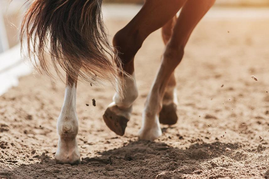Horse_feet.jpeg