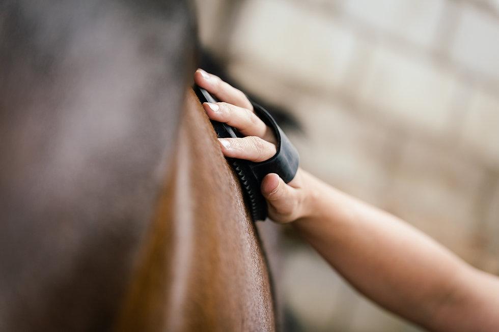 Brushing_horse.jpeg