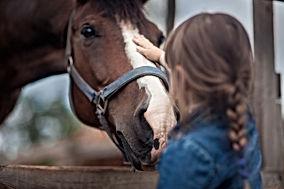 Patting_horse.jpeg