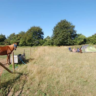 horsecamp.JPG