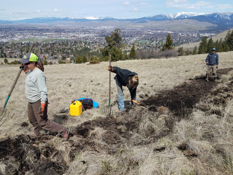Rattlesnake Trail Day Relocated to South Hills Spur