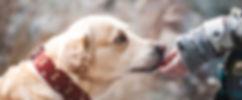 dog-1861839_1920.jpg