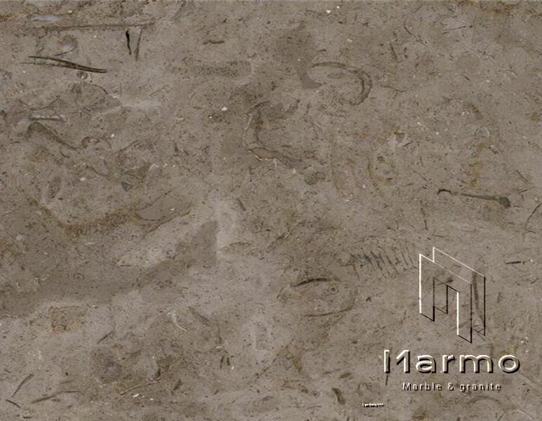 Melly grey fossils (4).jpg