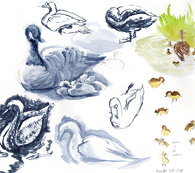 life_drawing_goose.png