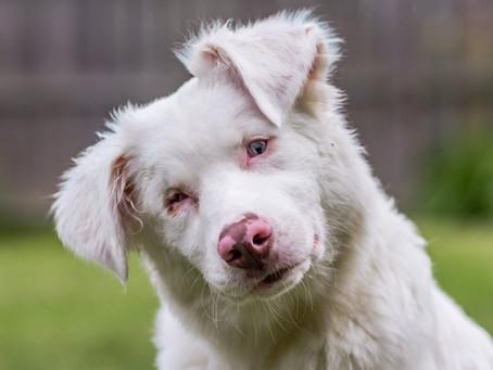 How Do I Get My Deaf Dog to Stop Barking?