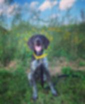 lacey 5.jpg