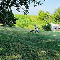 German Shorthair Pointer Puppies Kellogg Iowa