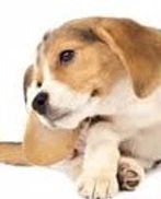 discount mobile dog groomer sun city center, ruskin, wimauma & riverview