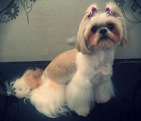 Such a Princess 👑🐕💞🐾😍🐶 #pawenvymob