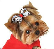 weekend mobile dog groomer riverview, brandon, lithia & valrico