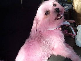 Now that's PINK! _pawenvy #pawenvymobile